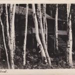 A black-and-white photograph of a cabin in the woods.