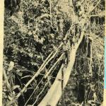 A black-and-white photograph of a group of soldiers crossing a bridge in a jungle.